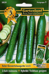 Salatgurken Saladin, Gemüse Samen - Treibhaus geeignet Gartenland Aschersleben
