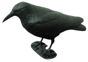 Schwarzer Rabe - Taubenschreck zur Taubenabwehr