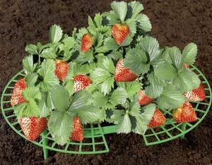 Erdbeer-Reifer im 5er Set Wenko