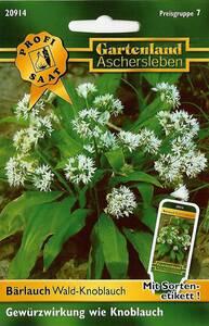 Bärlauch Wald Knoblauch - Kräuter Samen Gartenland Aschersleben