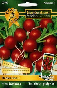 Radies Saxa 2, Saatband - Treibhaus geeignet Gartenland Aschersleben