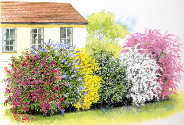 Gartenpflanzen Sichtschutz – msglocal.info