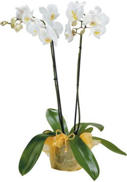gratis geschichten die blühende orchidee