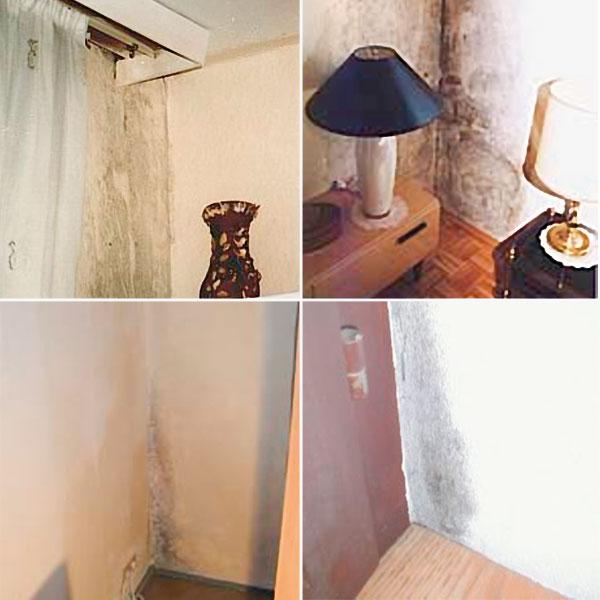 schimmelvernichter schimmelschutz im set je 500 ml bei westfalia versand sterreich. Black Bedroom Furniture Sets. Home Design Ideas