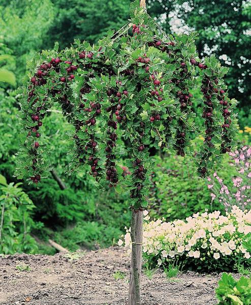 Artikel nicht lieferbar bei westfalia versand deutschland for Pflanzen bestellen berlin