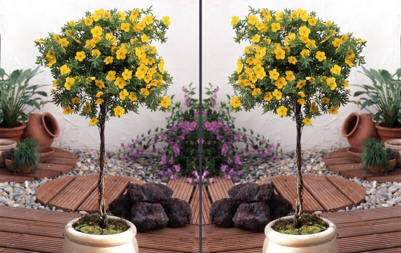 pflanzen st mmchen sonstige preisvergleiche erfahrungsberichte und kauf bei nextag. Black Bedroom Furniture Sets. Home Design Ideas